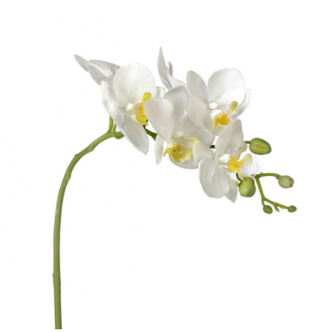 Parlane Phalaenopsis White Orchid Stem (520mm high)