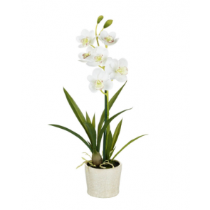 Parlane White Potted Orchid Cymbiduim