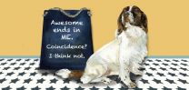 The Little Dog - Awesome is Me Greeting Card