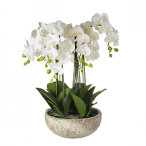 Parlane Large Orchid Spray in Ceramic Pot