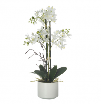 Parlane Artificial Potted Phalaenopsis